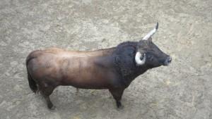 El toro 'Tafallés' en los corrales de la plaza de Valencia.
