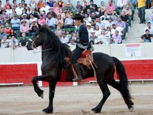 Peculiar paseíllo de Hermoso de Mendoza, montado en un caballo frisón y con silla charra.