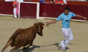 El recortador estellés Óscar de Luis cuelga una anilla en una vaca. Fotografía: S. Esparza.