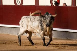 'Agitador', un gran toro de Fuente Ymbro, que mereció la vuelta al ruedo. Fotografía: Fran Jinénez.