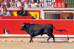 El toro bravo, el rey de los animales destiandos al sacrificio.