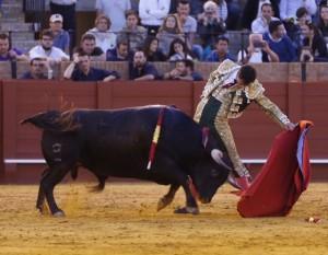 Natural de Silva al quinto, Greñoero, un muy buen utrero, que fue ovacionado en el arrastre. Fotografía: Arjona.