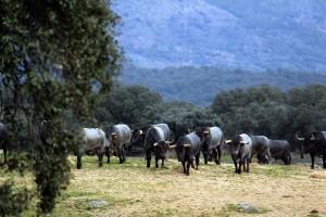 Dies de los toros separados para Pamplona.
