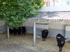 El encierro de El Capea, esta mañana en un corral de la plaza de toros de Pamplona.