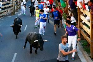 Los toros, a la entrada de la curva del callejón. Fotografía: Blanca Aldanondo.