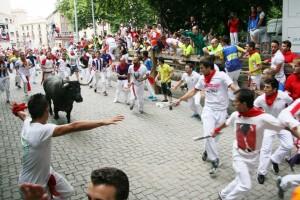 Los mosoz tiran de un toro. Fotografía: Enfoque taurino.