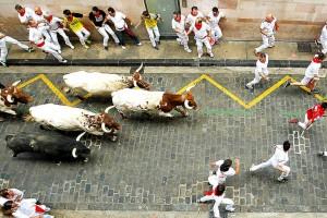 Los cabestros, abriendo la manada en Santo Domingo.
