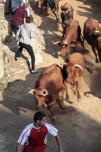 Las vacas de Ustárroz galoparon agrupadas. Fotografía: Luis Carmona.
