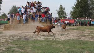 Los más jóvenes disfrutaron recortando a las vacas.
