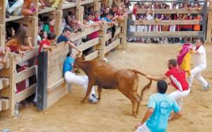 La vaca de la ganadería de Eulogio Mateo coge a Miguel Ruiz, mientras otros participantes en el festejo tratan de sacar al animal. Fotografía: Iñaki Marugán Agesta.