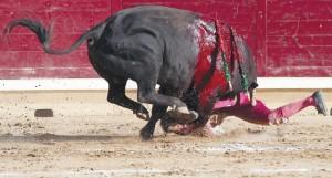 """Un pitón de 'Caracorta"""" atraviesa el muslo derecho de Francisco Marco. Fotografía: Óscar J. Barroso."""