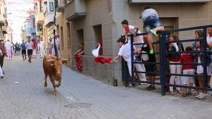 Un encierro de vacas en Lerín.