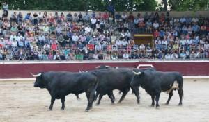 Los toros de Dolores Aguirre 2