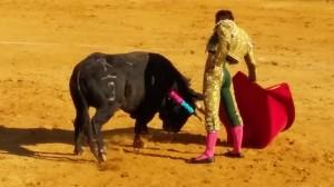 Javier Marín toreando con la diestra a un utrero de José Antonio Baigorri, de Ganadería de PIncha.