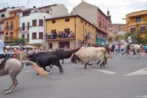 El ganado entrando en Mendavia. Fotografía: J. Suberviola.