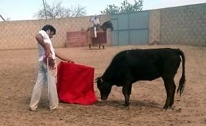 Expósito, al natual el sábado pasado en la finca El Ontanal de Lodosa, proiedad del ganadero José Antonio Baigorri.
