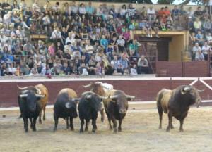 Los toros de Carriquiri en el ruedo tafallés. Fotografía: Arelizalde.