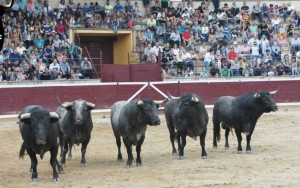 Toros de Saltillo 3