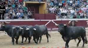 Toros de Saltillo 4