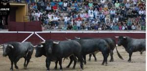 Toros de Saltillo 5
