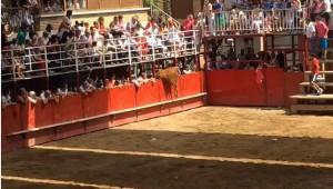 Momento en el que la vaca salta la barrera y se escapa. Fotografía: Ángel A.