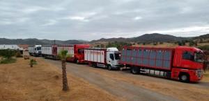 La polémica imagen de camiones de ganado saliendo de la finca Los Bolsicos.
