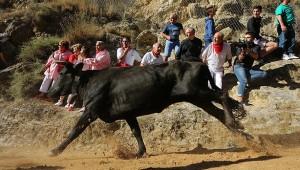 Una vaca galopa en el encierro de Falces de esta mañana. Fotografía: Beroiz.