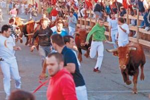 Uno de los astados corrió algo adelantado frente al resto de la manada. Fotografía: Javier Sesma.