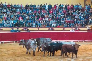 La plaza de toros de Lodosa prácticamente se llenó para contemplar el desencajonamiento de toros. Fotografía Montxo A. G.