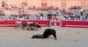 Momento en el que un toro mata a otro en la plaza de Sangüesa.