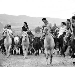 El traslado de ganado bravo con caballos proporcionó bonitas imágenes. Fotografía: Galdona.