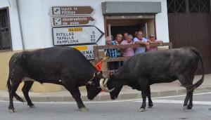 La imagen ganadora, 'Decidiendo por dónde van a Pamplona'.