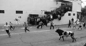 Salida del primer astado desde la plaza de toros de Lodosa. Fotografía: Vaquero.
