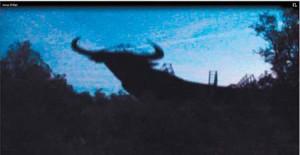 Momento en el que el toro va cayendo al suelo.