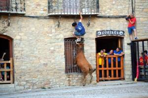 Una vaca de Hermanos Ganuza empleándose en Cantavieja.