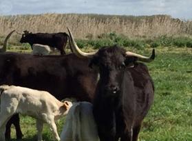 4. Vacas