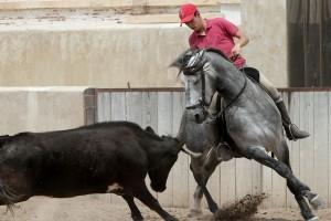 Guillemo Hermoso de Mendoza toreando de costado con 'Irak' en el rancho familiar.