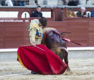 Derechazo de Javier Marín en la plaza de toros de Las Ventas. Fotografía: Javier Arroyo.