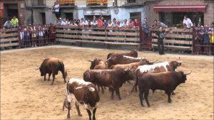 Desencajonamiento de toros de Merino hace unos años en un pueblo de Aragón.