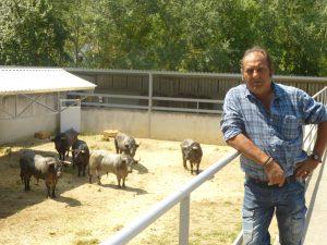 Julián Delgado, mayoral de José Escolar, ante los toros que ha traído hasta los corrales del Gas.