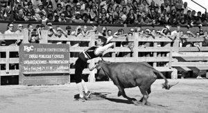 Uno de los nueve recortadores concursantes ayer en la Fiesta de la Vaca Brava.