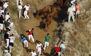 Las vacas de Íñiguez han protagonizado el encierro de esta mañana. Fotografías: Eduardo Buxens y J. C. Cordovilla.
