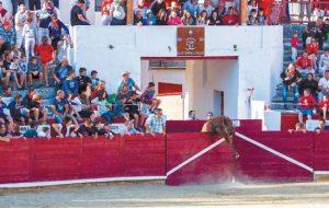 El astado salta al callejón y abre la puerta del golpe tras lanzar a un joven al patio de caballos. Fotografía: Aitor Arenaza.