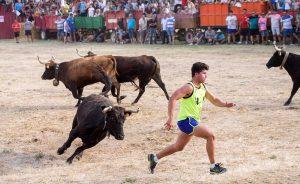 Un joven en apuros en la traída de vacas de ayer. Fotográfía: Blanca Aldanondo.