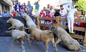 La manada de Prieto de la Cal en la última curva del recorrido. Fotografía: Alberto Galdona.