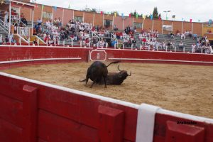 Momento en el que se han golpeado los dos toros de San Román. Fotografía: Alberto Aerizalde.