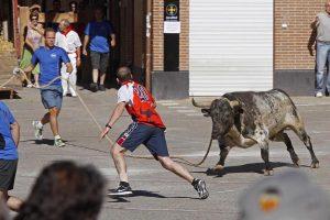 Imagen de archivo de un toro ensogado en las calles de Lodosa hace tres años.