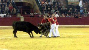 Al igual que en 2015, el concurso de roscaderos de Zaragoza lo protagonizarán este año vacas navarras de Arriazu.