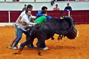 Cuatro aficionados ejecutan la suerte del roscadero en la plaza de Mendavia. Fotografía: Joseba Carnicer.