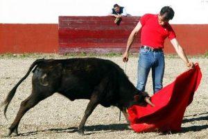 Celso Ortega toreando recientemente en un tentadero.